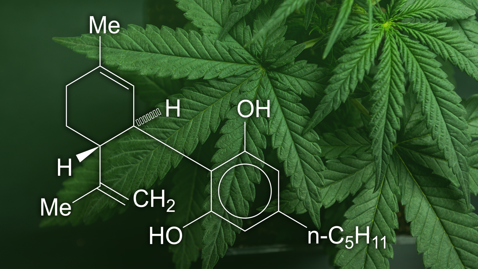 Learn About The Working Of CBD Vape Oil